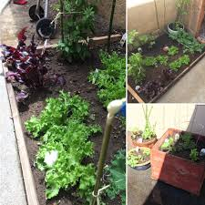 small space gardening advice please we have a small yard here in