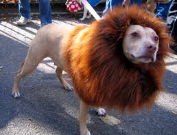 lion dogs lion wig for dogs stuff you should