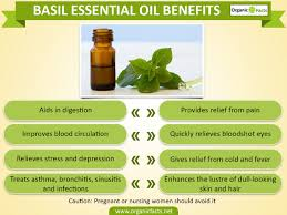 11 amazing benefits of basil essential oil organic facts