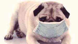Causes Of Sudden Blindness In Dogs Dog Diseases And Symptoms A To Z Petcarerx