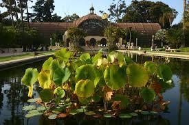 Balboa Park Botanical Gardens by Huge Water Gun Fight Trashes Balboa Park Ponds Kpbs