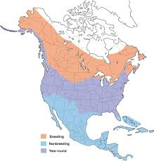 Hummingbird Migration Map Belted Kingfisher Range Map All About Birds Cornell Lab Of