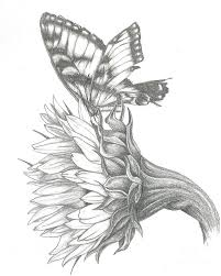 19 drawing of a butterfly on a flower best 10 butterfly