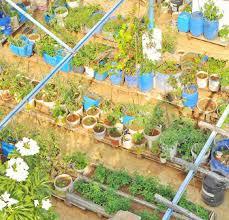 terrace gardening workshop on terrace gardening by siruthuli simplicity