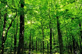 forest trees nature green wood sunlight backgrounds stock photo