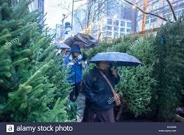 sale on trees biophilessurf info