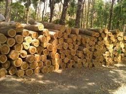 west wood company waf wood co ltd doussie wood