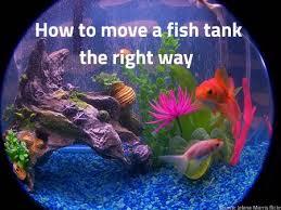 286 best tank images on aquarium ideas reef