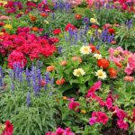 images of flower gardens flower garden pictures pictures of