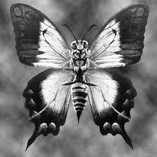 float like a butterfly sting like a hornet stefan s naturally