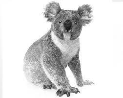 24 love koala images koalas koala