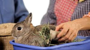 what kinds of toys do rabbits like pet rabbits youtube