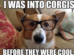 Hipster Dog Meme - 110 best corgi s images on pinterest pets corgis and corgi