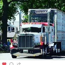Jobs Hiring No Resume Needed by Livestock Network Cattle Trailers For Sale Cattle Trucking