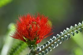australian native plant names land plants with names
