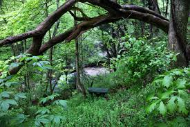 seat a tree forest waterfall structures free nature