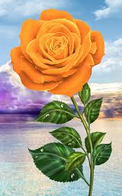 roses colors magic touch flowers android apps on play