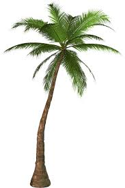 palm tree fifteen isolated stock photo by nobacks