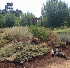 native plants in landscape management high summer in the native plant garden the real dirt blog anr