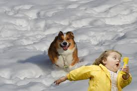 Bubbles Girl Meme - running corgi photoshopbattles