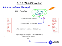 bad bid what is its in age related disease ppt