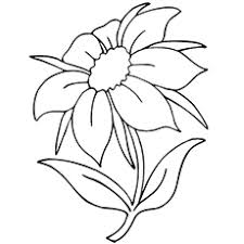 jasmine coloring pages top 25 free printable flowers coloring pages online