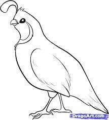 how to draw a quail step 4 birds pinterest quails bird and