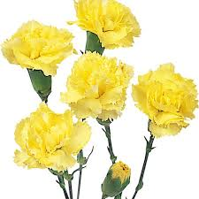wholesale carnations mini carnations yellow wholesale carnations theflowerexchange
