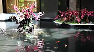 indoor japanese koi pond by okeanos aquascaping youtube