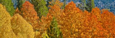 ways fall color california kcet