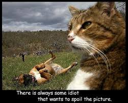 Funny Cat And Dog Memes - 10 hilarious memes of the relationship between cats and dogs