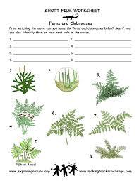 vascular plants trees grass ferns flowering plants