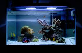 Mountain Aquascape Tips And Tricks On Creating Amazing Aquascapes Aquascaping Forum