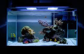 Aquascaping Rocks Tips And Tricks On Creating Amazing Aquascapes Aquascaping Forum