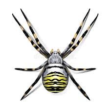 spider sketch drawing vector stock vector image 89377393