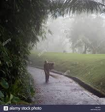 person on pathway como shambhala estate begawan giri bali stock