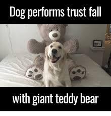 Meme Teddy Bear - dog performs trust fall with giant teddy bear meme on me me