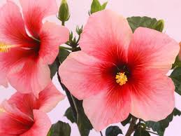 Low Light Indoor Flowers Best 25 Indoor Flowering Plants Ideas On Pinterest Low Light