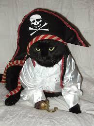 Kitten Halloween Costumes Pet 93 Halloween Cats Images Animals Halloween