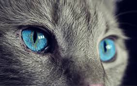 free photo cat animal cat s pet free image on
