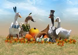 thanksgiving ducks mixed media by gravityx9 designs