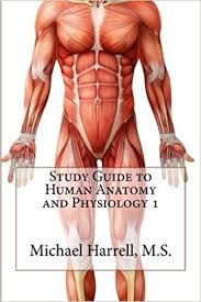 What Is Human Anatomy And Physiology 1 Study Guide To Human Anatomy And Physiology 1 Michael Harrell
