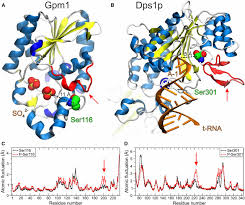 the pivotal role of protein phosphorylation in the control of