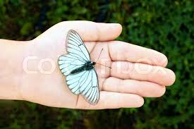 white butterfly with black stripes and volant in a baby arm on the