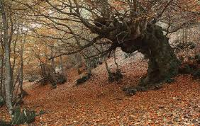 seven reasons why autumn is the best season in spain the local