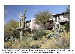 desert plants for landscaping desertusa