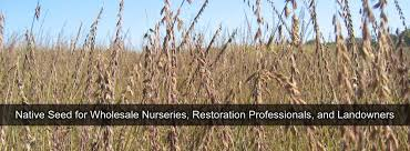 native plant seeds for sale quality native seed custom seed mixes local ecotype midwest
