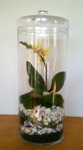 169 best orchids images on pinterest orchid terrarium plants