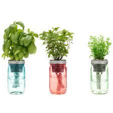 garden jar asian herb kit u2013 modernsprout