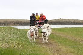 dog sledding tours guide to iceland